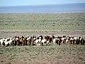 Dornogovi Province - Mongolia (6248536570).jpg