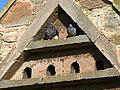 Dovecote at Kimmerston Farm - geograph.org.uk - 354658.jpg