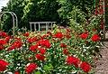 Duftende Schönheit, der Rosengarten im Kurpark Bad Mergentheim. 11.jpg
