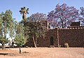 Dunst Namibia Oct 2002 slide116 - überragende Jakarand.jpg