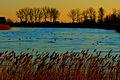 Dzikie kaczki lądujące na rzece Szkarpawie.jpg