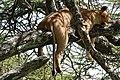 Eastern Serengeti 2012 06 01 3382 (7522720196).jpg
