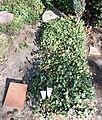 Ehrengrab Trakehner Allee 1 (Westend) August Scholtis.jpg