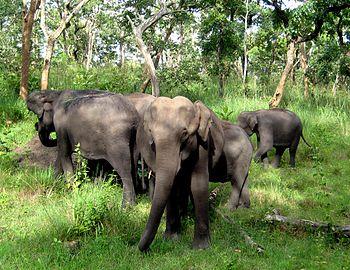 Elephant Family in Mudumalai.jpg