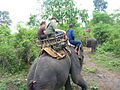 Elephant ride in Chiang Rai Province 2007-05 3.JPG
