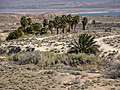 Elevated view of Blue Point Spring (d2ed481f-92e0-491b-a760-f9765320191c).jpg