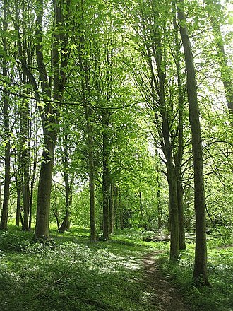 Lindon (Middle-earth) - Elm woods in Herefordshire, England. The English countryside provided much of the inspiration for Tolkien's works