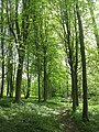 Elm woods, Fishpool Valley - geograph.org.uk - 1289997.jpg