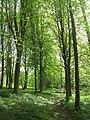 Elm woods, Fishpool Valley - geograph.org.uk - 1289997.jpg