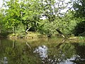 Epping Forest, Strawberry Hill Pond - geograph.org.uk - 548653.jpg