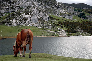 A horse in the Ercina lake (Spain)