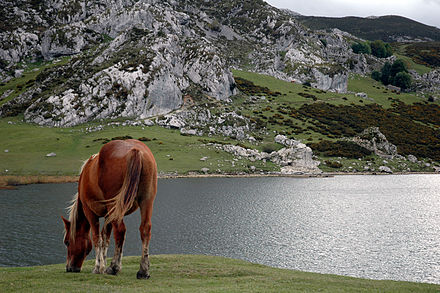 Ercina lake, Covadonga. According to the legend, under its waters a village -or perhaps a city- is hidden. ErcinaLakeHorse.jpg