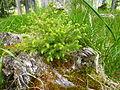 Erneuerung des Waldes.JPG