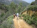 Escursiones a Caballo en Arroyo Frio - panoramio.jpg