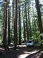Eugene-Springfield, OR, OR, USA - panoramio (1).jpg