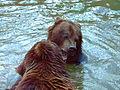 Európai barna medvék.jpg