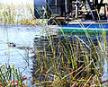 Everglades, Miami (8253441650).jpg
