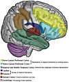 Explicit timing in the brain.jpg
