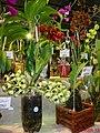 Exposição Nacional de Orquídeas de Catanduva no Colégio Nossa Senhora do Calvário - Colegião - panoramio (8).jpg