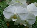 Exposition mille et une orchidées 2.jpg