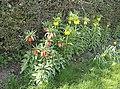 Extra flower bed - geograph.org.uk - 978161.jpg