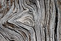 Eye of the Wood (5933422515).jpg