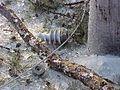 FEMA - 555 - Photograph by John Shea taken on 12-29-2000 in Arkansas.jpg