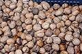 Fagales - Juglans regia fruits 1.jpg
