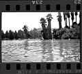 Fairmount park leaning palm 1966-08 1.jpg
