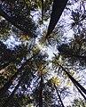 Fairy forest.jpg