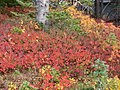 Fall colors (1977ee8ad1404b53ba1d5f8f1c4896bd).JPG