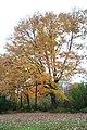 Fall in Johnstown - panoramio.jpg