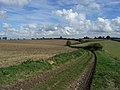 Farmland, Upham - geograph.org.uk - 248655.jpg