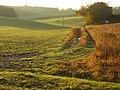 Farmland and track, Binfield Heath - geograph.org.uk - 1049618.jpg