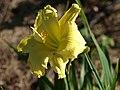 Fenceline Daylilies - 9275132981.jpg