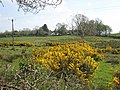 Field near Drumdoe - geograph.org.uk - 798303.jpg