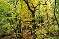 Fingle Woods (6236).jpg