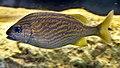 Fish 6 (4387342116).jpg