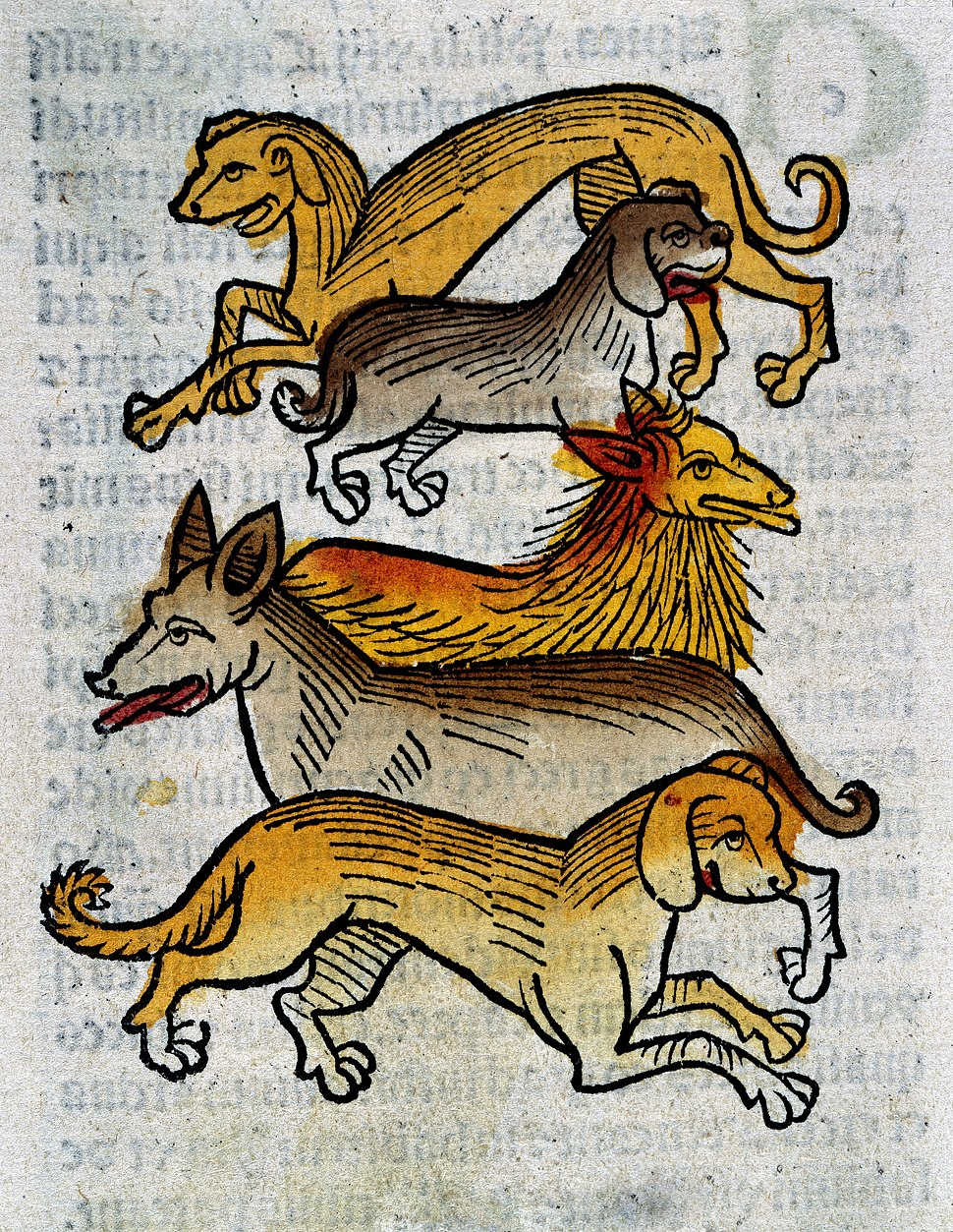 Five different types of dogs, woodcut, 1547 Wellcome L0029217