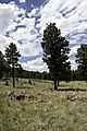 Flagstaff Scenery near FR 522 - panoramio (2).jpg