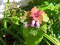 Fleur clochette.jpg