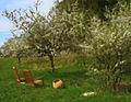 Flickr - Per Ola Wiberg ~ mostly away - Rosenhills garden.jpg