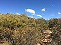 Flinders Ranges SA 5434, Australia - panoramio (164).jpg
