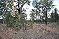 Flinders Ranges SA 5434, Australia - panoramio (99).jpg