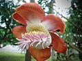 Flora (157).jpg