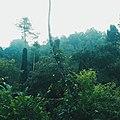 Flora Jogja 08.jpg