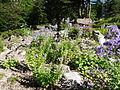 Flore du Caucase-Jardin d'altitude du Haut-Chitelet 02.JPG