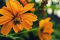 Flores belas..jpg