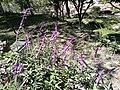 Flors al parc del Cerro de Santa Apolonia de Cajamarca03.jpg