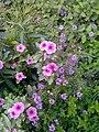 Flower's in Baghdad 2.jpg
